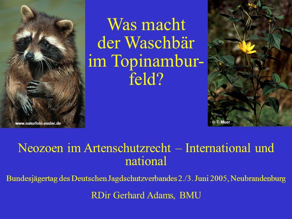 Was macht der Waschbär im Topinambur- feld? Neozoen im Artenschutzrecht – International und national Bundesjägertag des Deutschen Jagdschutzverbandes