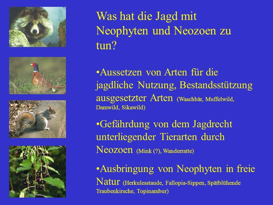 Was hat die Jagd mit Neophyten und Neozoen zu tun? Aussetzen von Arten für die jagdliche Nutzung, Bestandsstützung ausgesetzter Arten (Waschbär, Muffe
