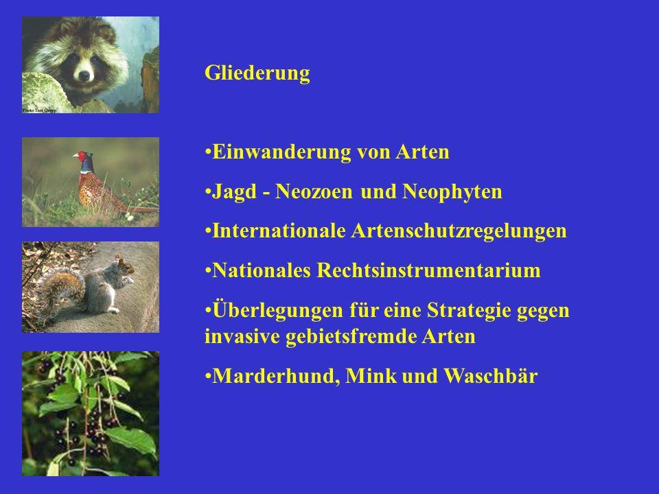 Gliederung Einwanderung von Arten Jagd - Neozoen und Neophyten Internationale Artenschutzregelungen Nationales Rechtsinstrumentarium Überlegungen für