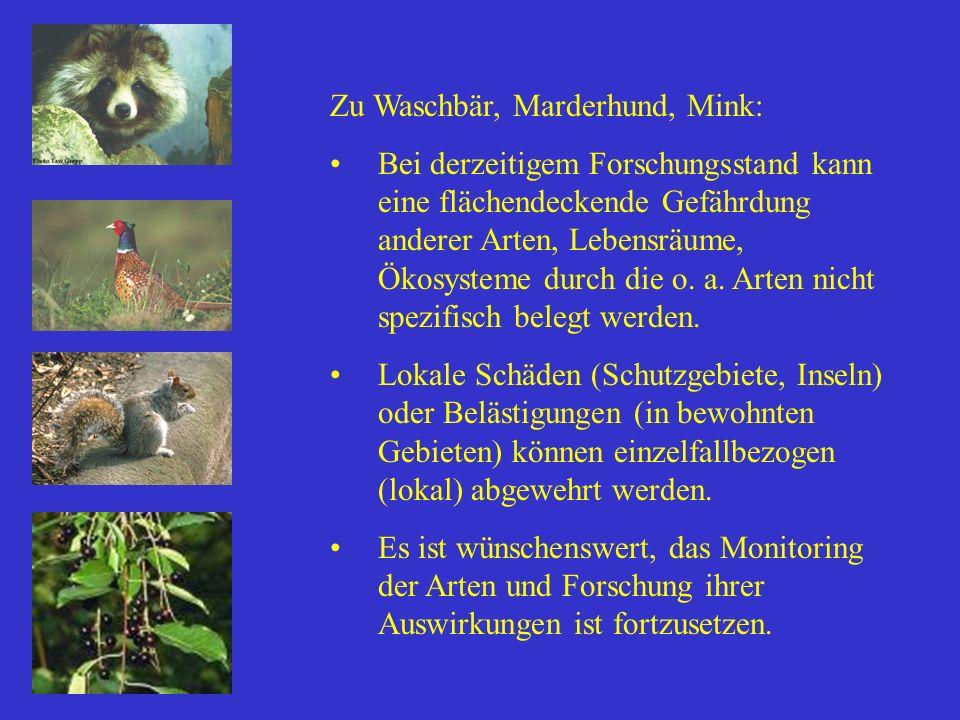 Zu Waschbär, Marderhund, Mink: Bei derzeitigem Forschungsstand kann eine flächendeckende Gefährdung anderer Arten, Lebensräume, Ökosysteme durch die o