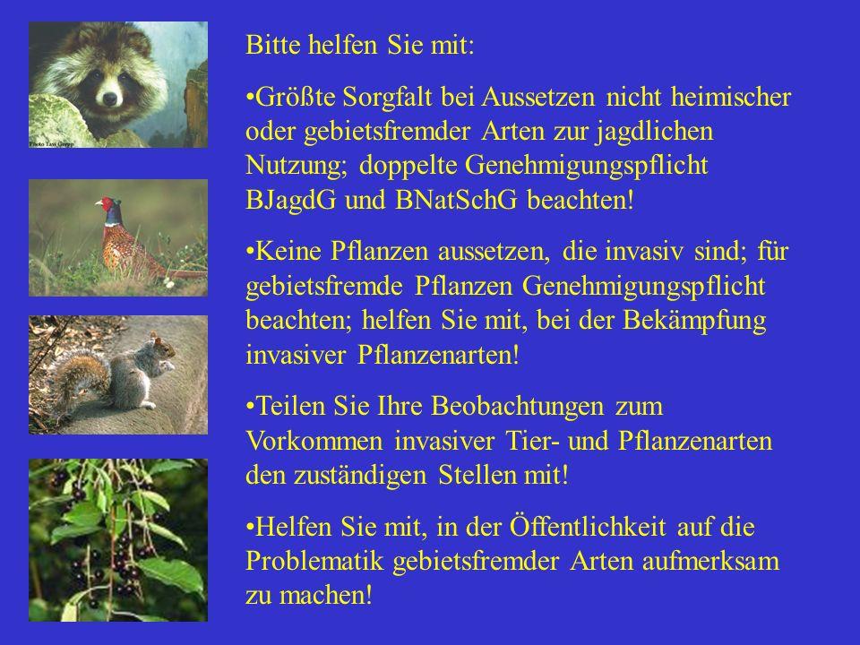 Bitte helfen Sie mit: Größte Sorgfalt bei Aussetzen nicht heimischer oder gebietsfremder Arten zur jagdlichen Nutzung; doppelte Genehmigungspflicht BJ