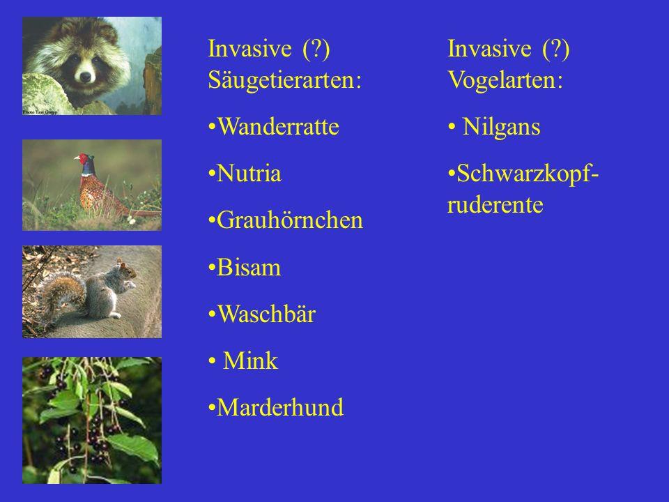 Invasive (?) Säugetierarten: Wanderratte Nutria Grauhörnchen Bisam Waschbär Mink Marderhund Invasive (?) Vogelarten: Nilgans Schwarzkopf- ruderente