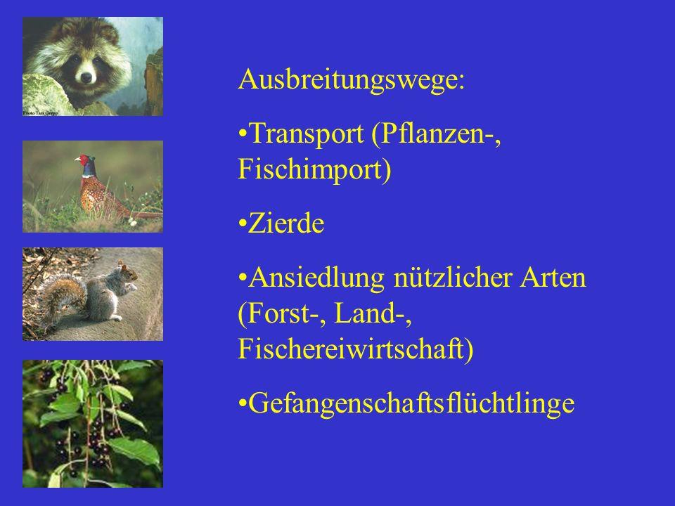 Ausbreitungswege: Transport (Pflanzen-, Fischimport) Zierde Ansiedlung nützlicher Arten (Forst-, Land-, Fischereiwirtschaft) Gefangenschaftsflüchtling