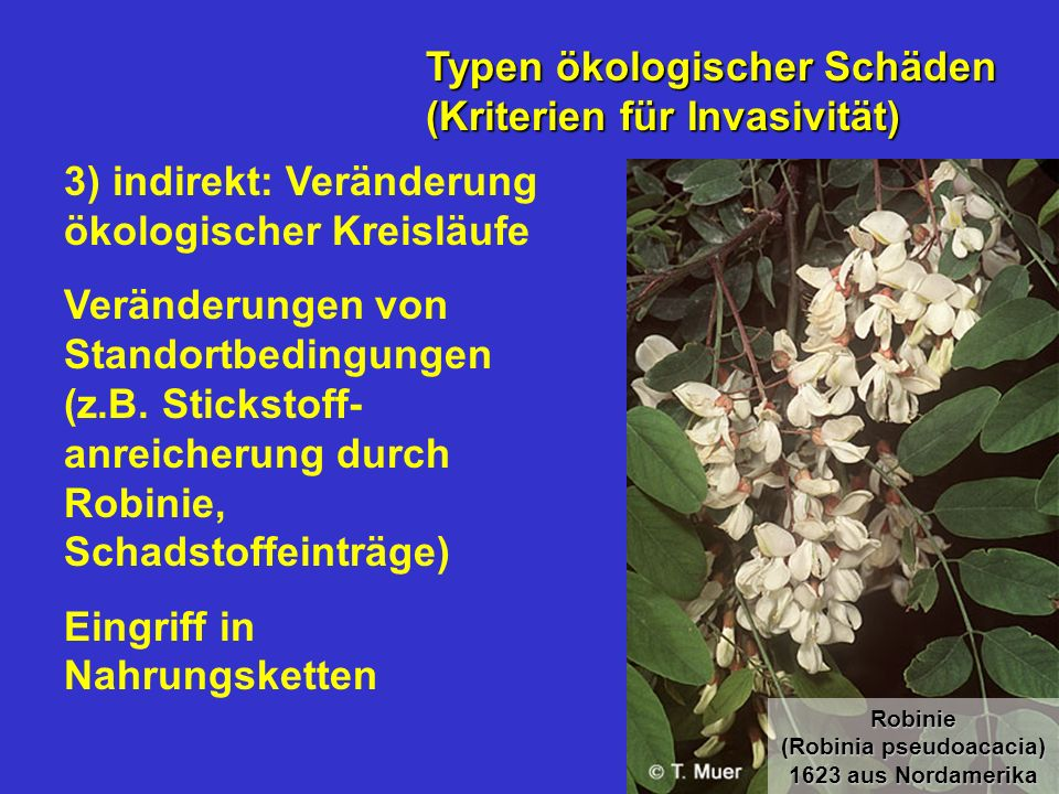 3) indirekt: Veränderung ökologischer Kreisläufe Veränderungen von Standortbedingungen (z.B. Stickstoff- anreicherung durch Robinie, Schadstoffeinträg