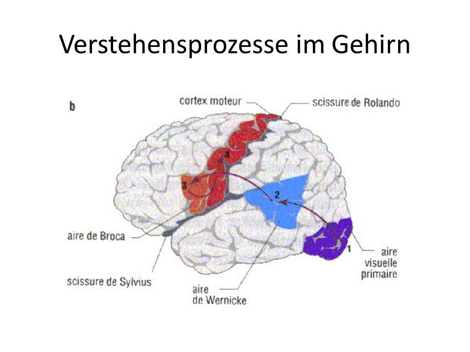 Verstehensprozesse im Gehirn
