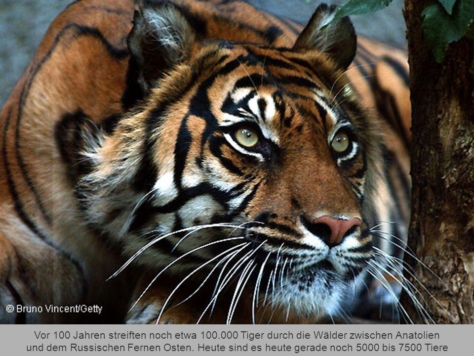 Bedrohte Tierarten: Die Rote Liste wächst und wächst Klicke mich weiter, aber bitte erdrück mich nicht - Danke.