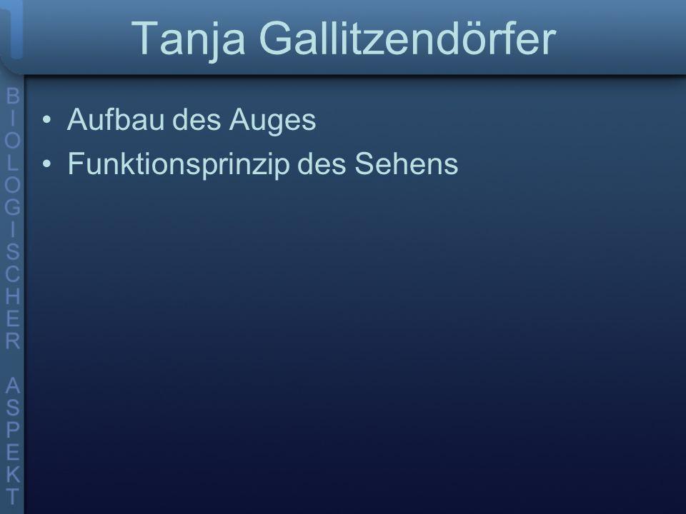 Tanja Gallitzendörfer Aufbau des Auges Funktionsprinzip des Sehens