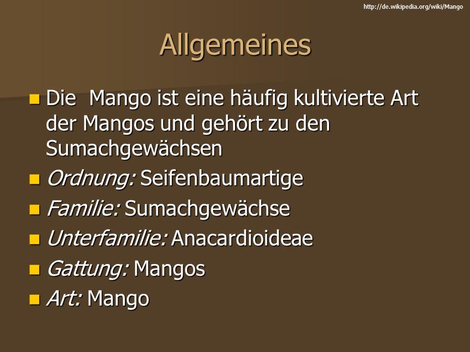 Allgemeines Die Mango ist eine häufig kultivierte Art der Mangos und gehört zu den Sumachgewächsen Die Mango ist eine häufig kultivierte Art der Mango