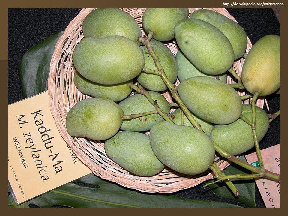 Herkunft & Verbreitung Die Pflanze stammt aus dem Gebiet zwischen dem indischen Assam und Myanmar und ist im tropischen Regenwald zuhause, kommt heute aber als Kulturpflanze in weiten Teilen der Welt vor, darunter in den USA, Mexiko und weiteren Ländern Mittel- und Südamerikas, in der Karibik, im tropischen Gürtel Afrikas (etwa in Kenia und an der Elfenbeinküste), in weiten Teilen Asiens (etwa in Thailand und auf den Philippinen) und auch in Australien Die Pflanze stammt aus dem Gebiet zwischen dem indischen Assam und Myanmar und ist im tropischen Regenwald zuhause, kommt heute aber als Kulturpflanze in weiten Teilen der Welt vor, darunter in den USA, Mexiko und weiteren Ländern Mittel- und Südamerikas, in der Karibik, im tropischen Gürtel Afrikas (etwa in Kenia und an der Elfenbeinküste), in weiten Teilen Asiens (etwa in Thailand und auf den Philippinen) und auch in Australien Indien gilt mit einer Produktion von 10,0 Millionen Tonnen im Jahr immer noch als Hauptproduzent von Mangofrüchten Indien gilt mit einer Produktion von 10,0 Millionen Tonnen im Jahr immer noch als Hauptproduzent von Mangofrüchten In Europa werden die Bäume hauptsächlich in Spanien kultiviert, hier vor allem an der Costa del Sol und auf den kanarischen Inseln In Europa werden die Bäume hauptsächlich in Spanien kultiviert, hier vor allem an der Costa del Sol und auf den kanarischen Inseln Die Anzucht ist schwierig, wird aber unter Hobbygärtnern immer beliebter Die Anzucht ist schwierig, wird aber unter Hobbygärtnern immer beliebter http://de.wikipedia.org/wiki/Mango