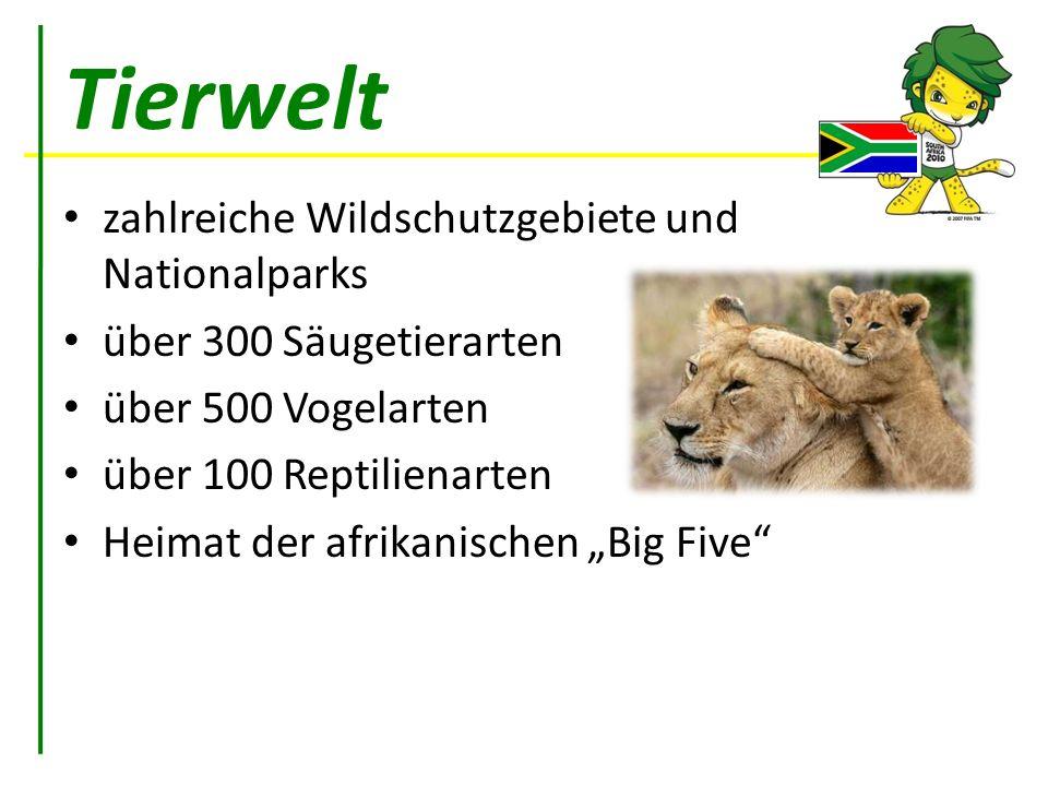 Tierwelt zahlreiche Wildschutzgebiete und Nationalparks über 300 Säugetierarten über 500 Vogelarten über 100 Reptilienarten Heimat der afrikanischen B