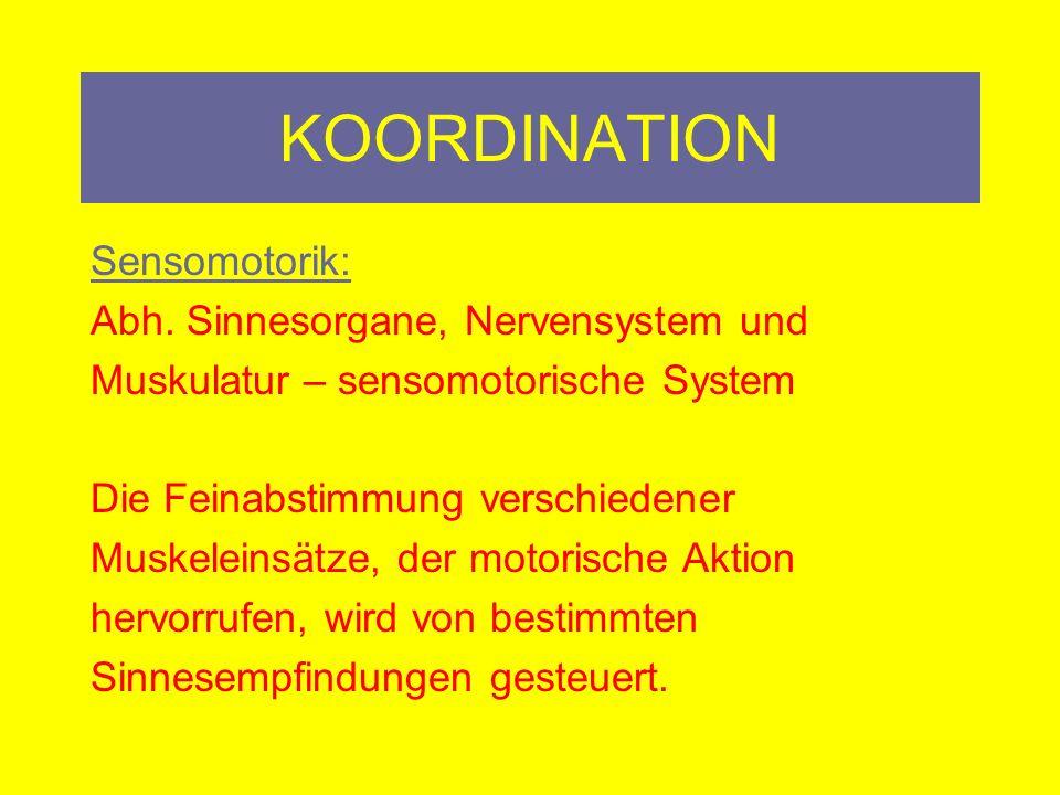 KOORDINATION Intramuskuläre und intermuskuläre Koordination Intramuskuläre Koo.: Nerv-Muskel-Zusammenspiel eines einzelnen Muskels innerhalb eines gezielten Bewegungsablaufs.