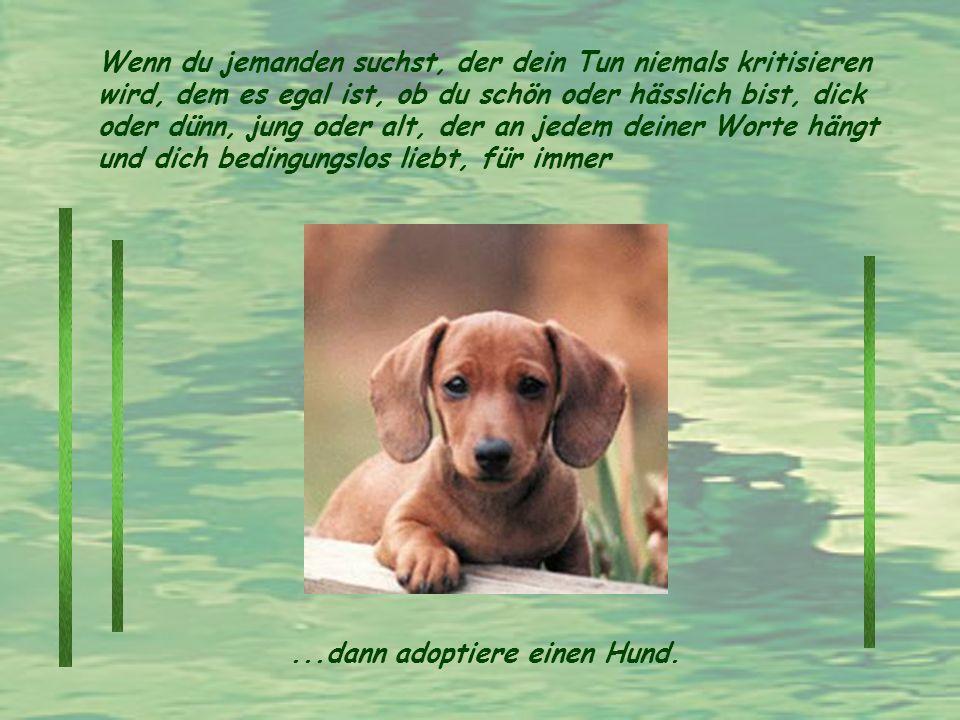 Wenn du jemanden suchst, der dein Tun niemals kritisieren wird, dem es egal ist, ob du schön oder hässlich bist, dick oder dünn, jung oder alt, der an jedem deiner Worte hängt und dich bedingungslos liebt, für immer...dann adoptiere einen Hund.