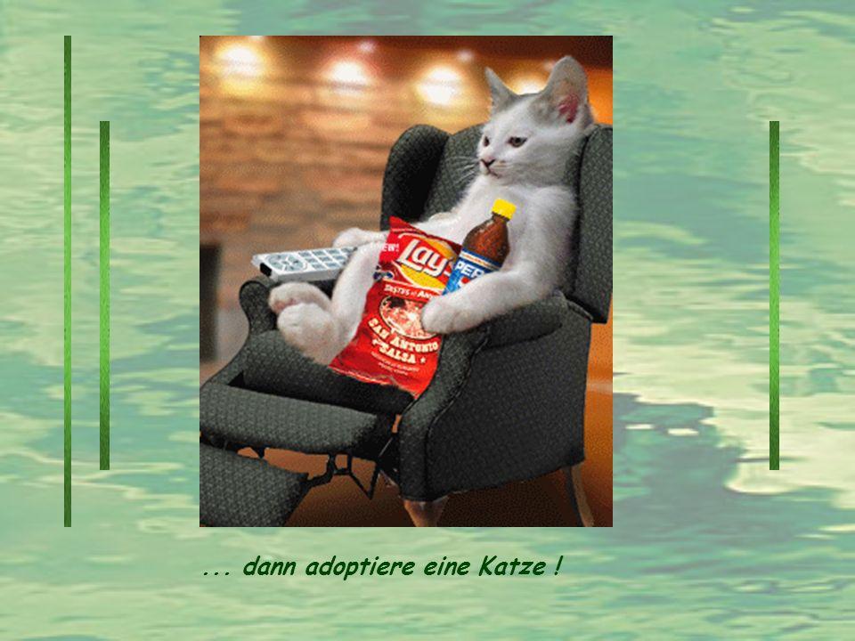 ... dann adoptiere eine Katze !
