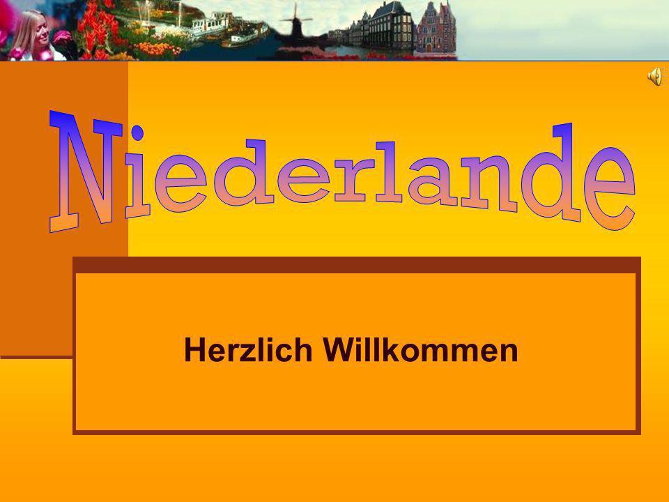 Spezialitäten Eine besondere Spezialität sind die butterzarten Matjes-Heringe aus Scheveningen die man zur Heringssaison (Hollandse Nieuwe) an Imbissständen im ganzen Land mit Zwiebeln und Brötchen erhält.