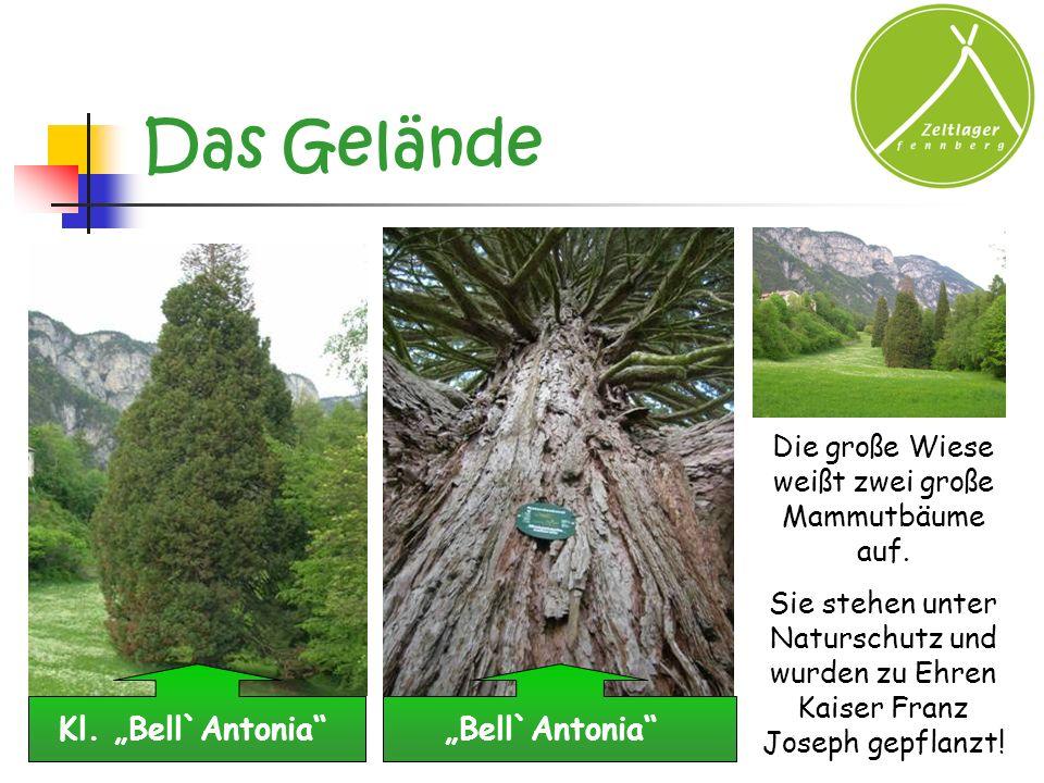Das Gelände Kl. Bell`AntoniaBell`Antonia Die große Wiese weißt zwei große Mammutbäume auf. Sie stehen unter Naturschutz und wurden zu Ehren Kaiser Fra