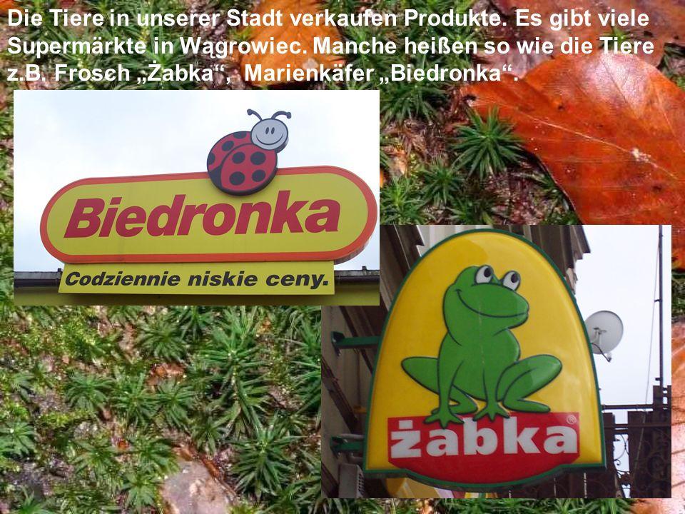 Die Tiere in unserer Stadt verkaufen Produkte. Es gibt viele Supermärkte in Wągrowiec. Manche heißen so wie die Tiere z.B. Frosch Żabka, Marienkäfer B