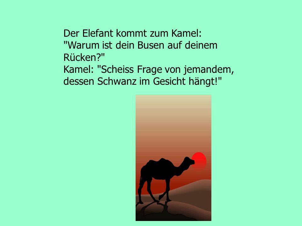 Der Elefant kommt zum Kamel: Warum ist dein Busen auf deinem Rücken? Kamel: Scheiss Frage von jemandem, dessen Schwanz im Gesicht hängt!
