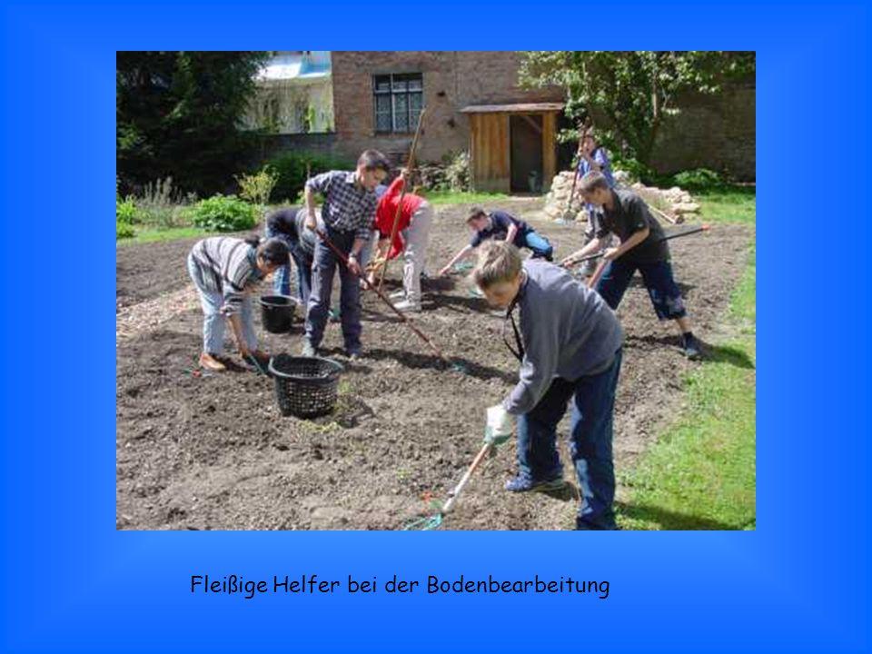 Fleißige Helfer bei der Bodenbearbeitung