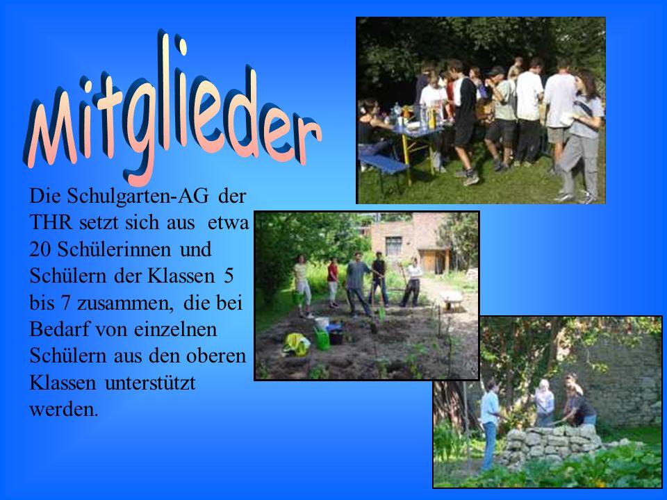 Die Schulgarten-AG der THR setzt sich aus etwa 20 Schülerinnen und Schülern der Klassen 5 bis 7 zusammen, die bei Bedarf von einzelnen Schülern aus den oberen Klassen unterstützt werden.