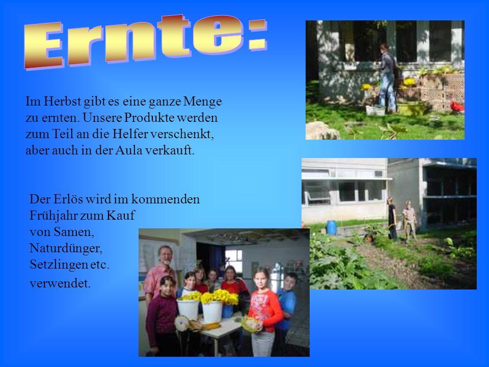 Außerdem wird davon ein Kürbissuppenessen organisiert, zu dem alle Mitglieder der Schulgarten- AG in einer 6.