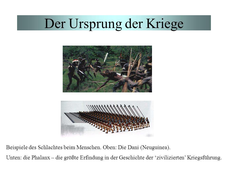 Der Ursprung der Kriege Beispiele des Schlachtes beim Menschen. Oben: Die Dani (Neuguinea). Unten: die Phalanx – die größte Erfindung in der Geschicht