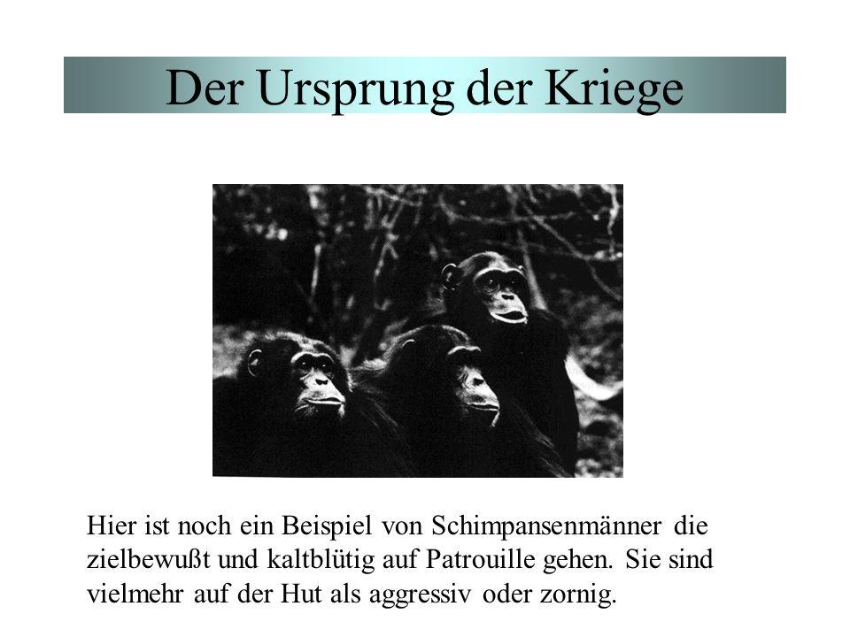 Der Ursprung der Kriege Hier ist noch ein Beispiel von Schimpansenmänner die zielbewußt und kaltblütig auf Patrouille gehen. Sie sind vielmehr auf der