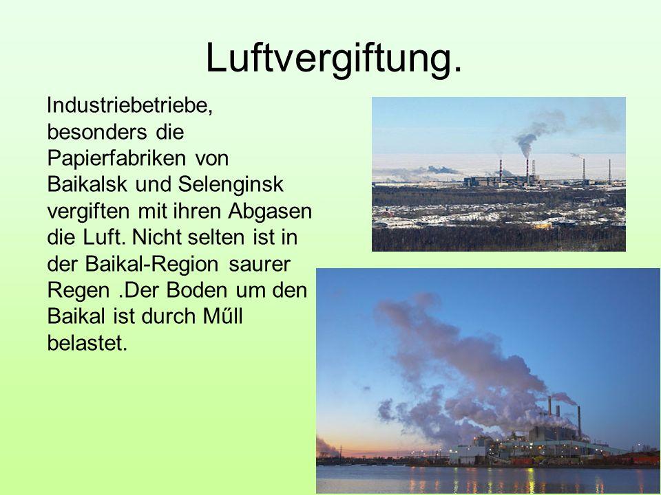 Luftvergiftung. Industriebetriebe, besonders die Papierfabriken von Baikalsk und Selenginsk vergiften mit ihren Abgasen die Luft. Nicht selten ist in