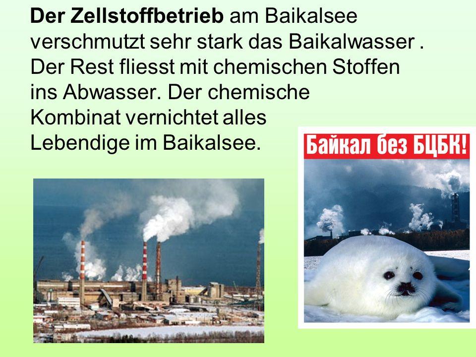 Der Zellstoffbetrieb am Baikalsee verschmutzt sehr stark das Baikalwasser. Der Rest fliesst mit chemischen Stoffen ins Abwasser. Der chemische Kombina