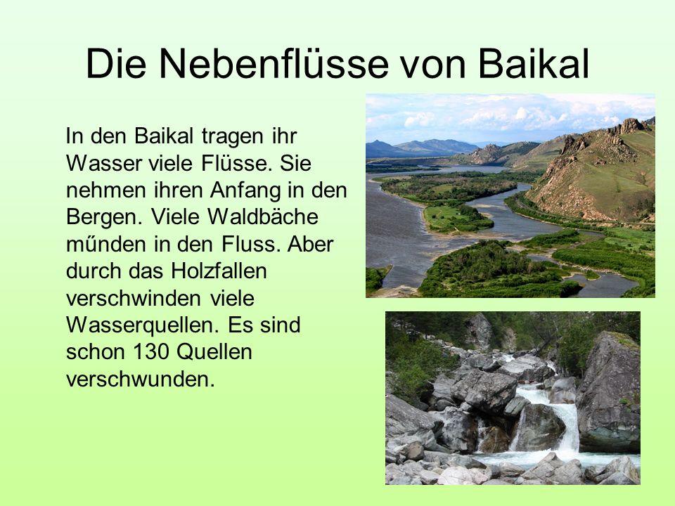 Die Nebenflüsse von Baikal In den Baikal tragen ihr Wasser viele Flüsse. Sie nehmen ihren Anfang in den Bergen. Viele Waldbäche műnden in den Fluss. A