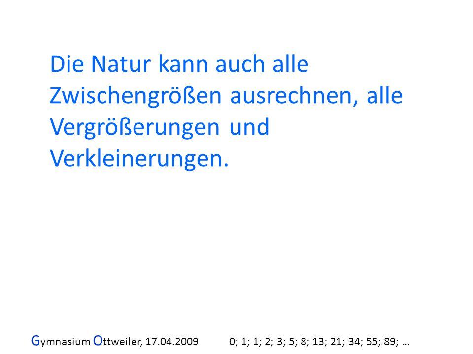 G ymnasium O ttweiler, 17.04.2009 0; 1; 1; 2; 3; 5; 8; 13; 21; 34; 55; 89; … Die Natur kann auch alle Zwischengrößen ausrechnen, alle Vergrößerungen u
