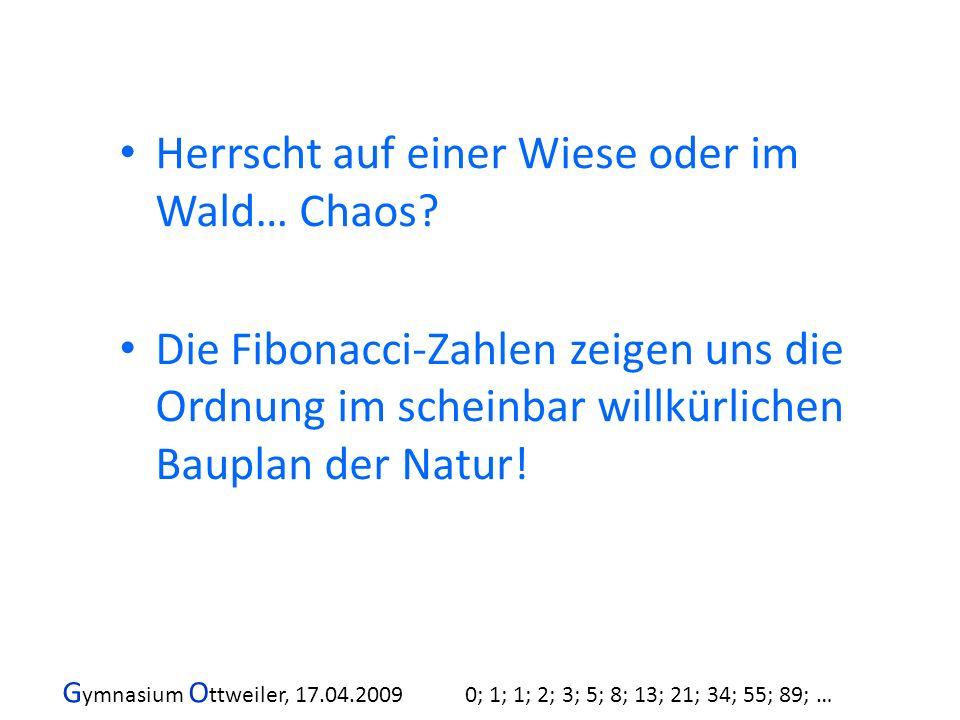 G ymnasium O ttweiler, 17.04.2009 0; 1; 1; 2; 3; 5; 8; 13; 21; 34; 55; 89; … Herrscht auf einer Wiese oder im Wald… Chaos? Die Fibonacci-Zahlen zeigen