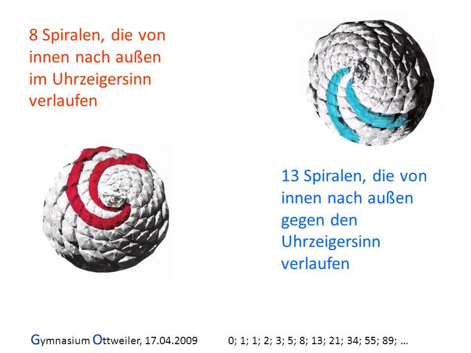 8 Spiralen, die von innen nach außen im Uhrzeigersinn verlaufen 13 Spiralen, die von innen nach außen gegen den Uhrzeigersinn verlaufen