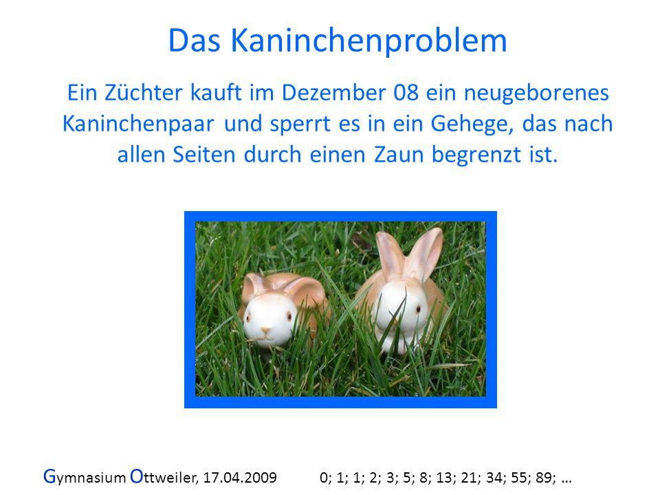 G ymnasium O ttweiler, 17.04.2009 0; 1; 1; 2; 3; 5; 8; 13; 21; 34; 55; 89; … Wie viele Paare hat der Züchter am Ende des Jahres 2009, wenn sich das Kaninchenpaar nach folgenden Regeln vermehrt?