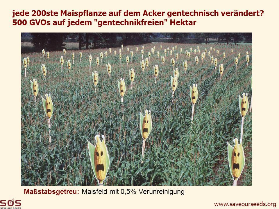 www.saveourseeds.org jede 200ste Maispflanze auf dem Acker gentechnisch verändert? 500 GVOs auf jedem