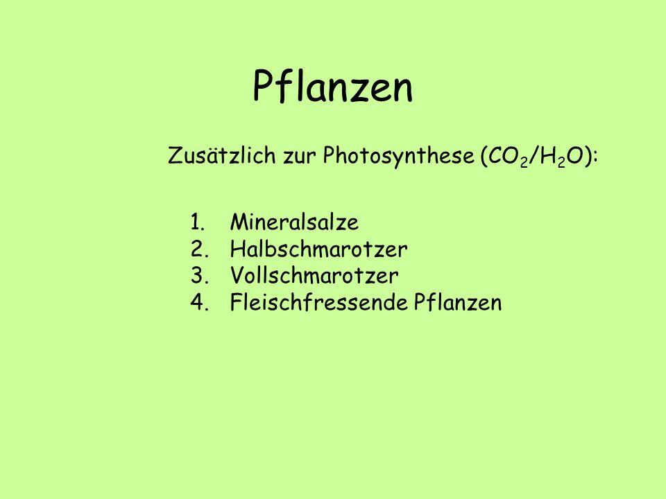 Pflanzen Zusätzlich zur Photosynthese (CO 2 /H 2 O): 1. Mineralsalze 2. Halbschmarotzer 3. Vollschmarotzer 4. Fleischfressende Pflanzen