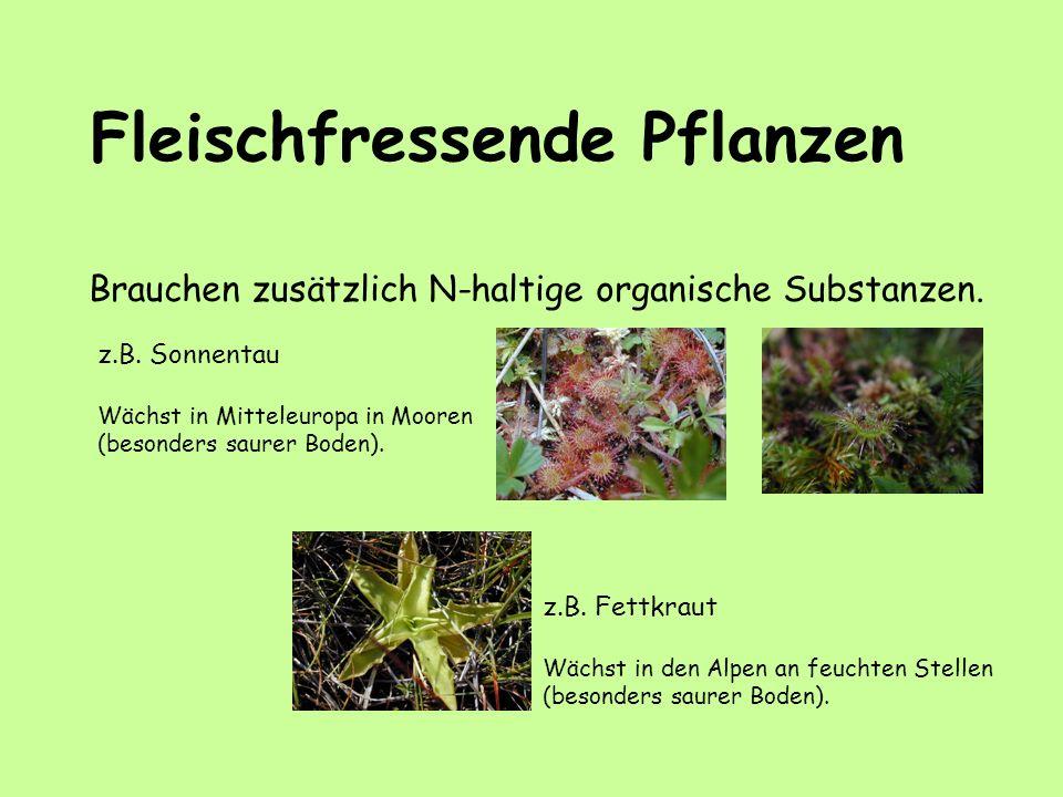 Fleischfressende Pflanzen Brauchen zusätzlich N-haltige organische Substanzen. z.B. Sonnentau Wächst in Mitteleuropa in Mooren (besonders saurer Boden