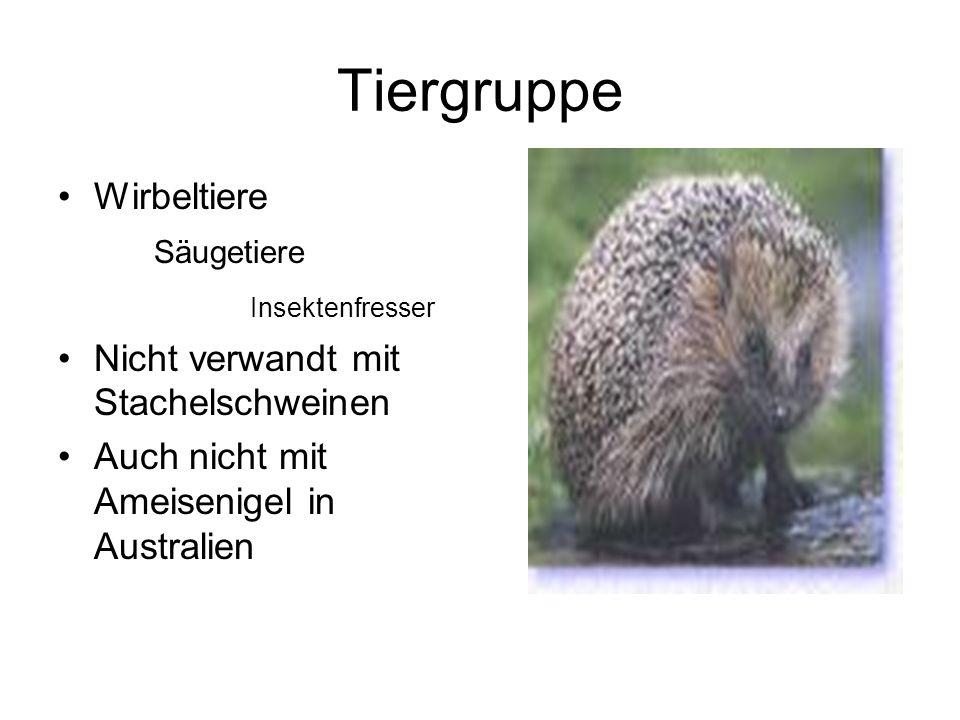 Tiergruppe Wirbeltiere Säugetiere Insektenfresser Nicht verwandt mit Stachelschweinen Auch nicht mit Ameisenigel in Australien