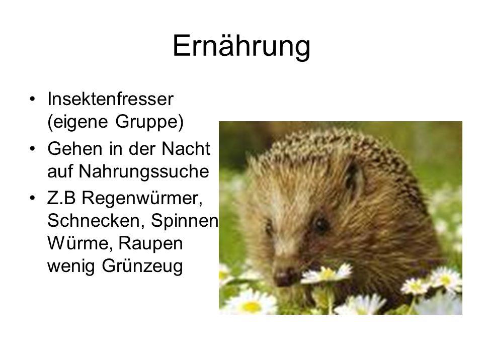 Vermehrung Säugetiere, also gebären April bis Sept.