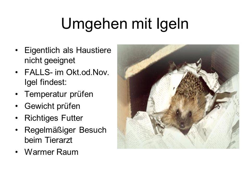 Umgehen mit Igeln Eigentlich als Haustiere nicht geeignet FALLS- im Okt.od.Nov. Igel findest: Temperatur prüfen Gewicht prüfen Richtiges Futter Regelm