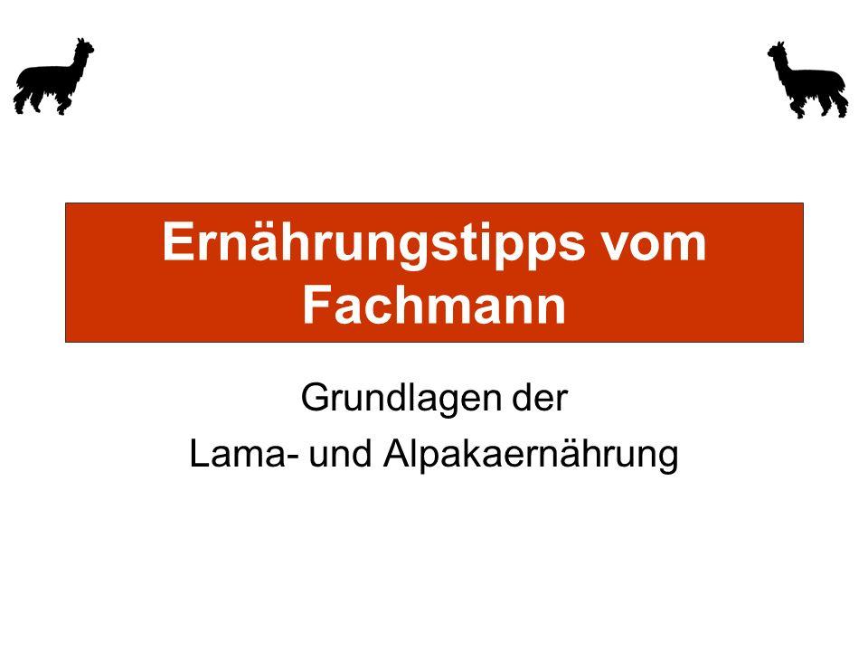 Ernährungstipps vom Fachmann Grundlagen der Lama- und Alpakaernährung