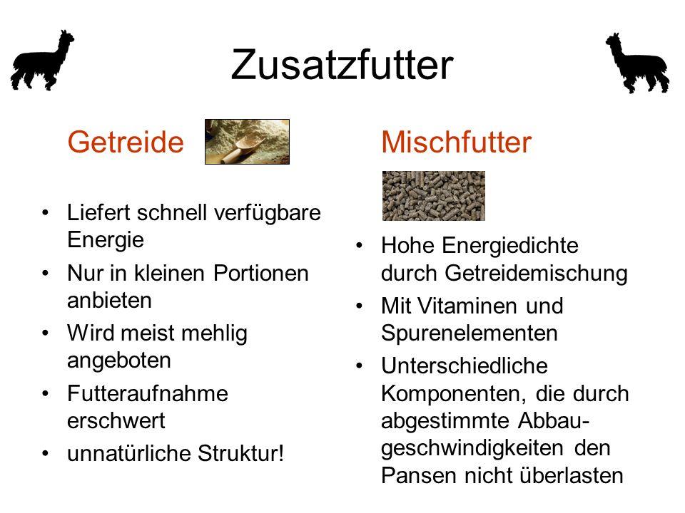 Zusatzfutter Getreide Liefert schnell verfügbare Energie Nur in kleinen Portionen anbieten Wird meist mehlig angeboten Futteraufnahme erschwert unnatürliche Struktur.
