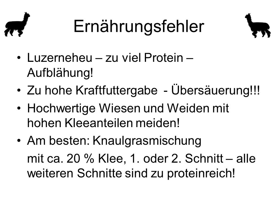 Ernährungsfehler Luzerneheu – zu viel Protein – Aufblähung! Zu hohe Kraftfuttergabe - Übersäuerung!!! Hochwertige Wiesen und Weiden mit hohen Kleeante