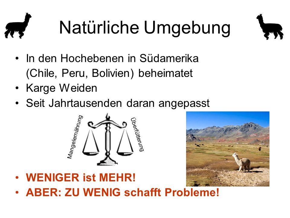 In den Hochebenen in Südamerika (Chile, Peru, Bolivien) beheimatet Karge Weiden Seit Jahrtausenden daran angepasst WENIGER ist MEHR.