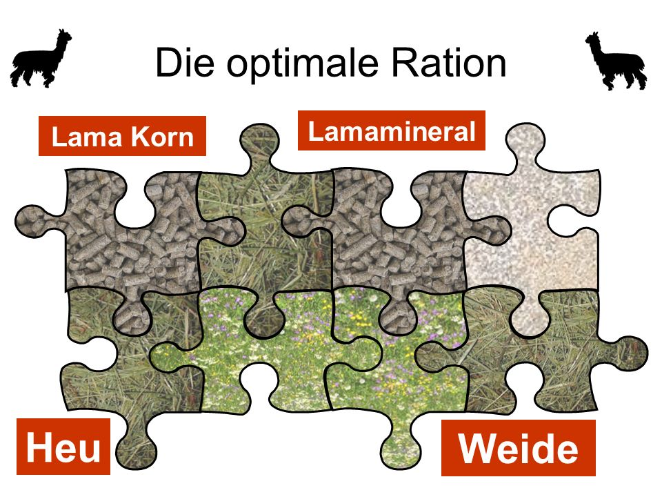 Lamamineral Lama Korn Heu Weide Die optimale Ration