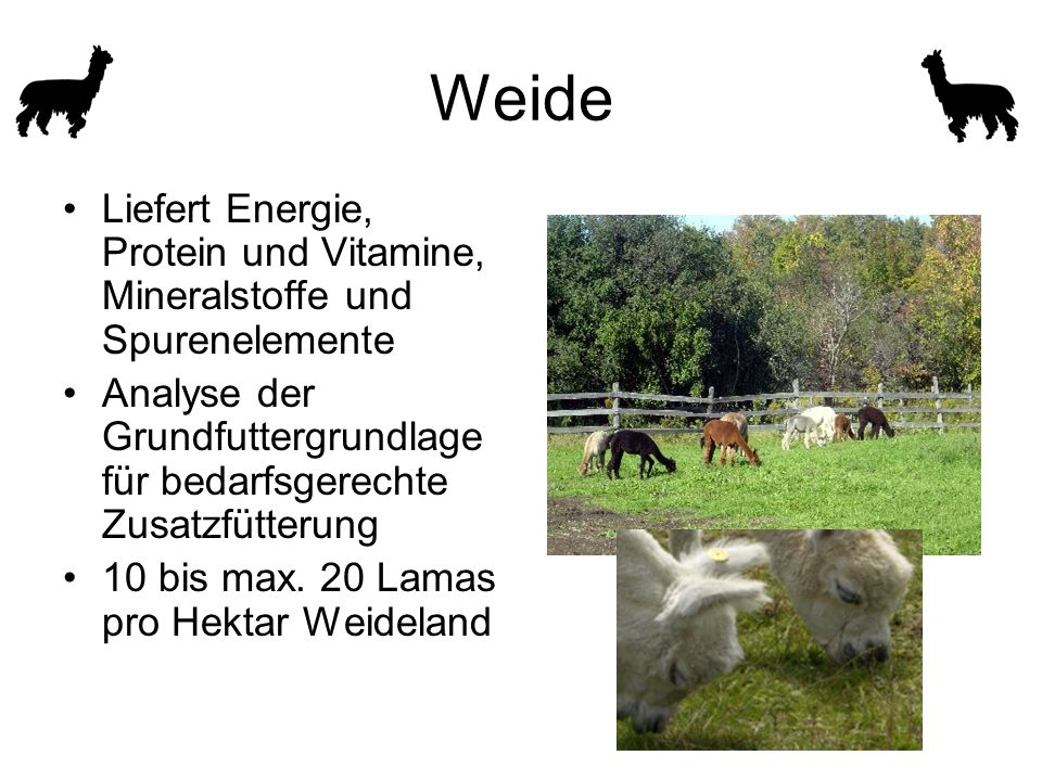 Weide Liefert Energie, Protein und Vitamine, Mineralstoffe und Spurenelemente Analyse der Grundfuttergrundlage für bedarfsgerechte Zusatzfütterung 10 bis max.
