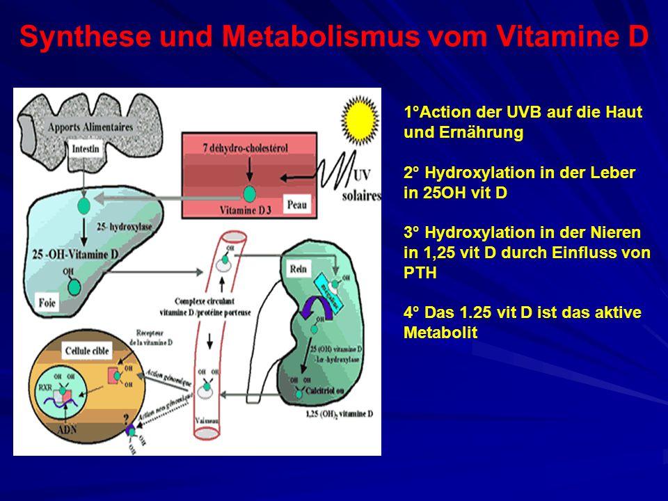 Synthese und Metabolismus vom Vitamine D 1°Action der UVB auf die Haut und Ernährung 2° Hydroxylation in der Leber in 25OH vit D 3° Hydroxylation in d