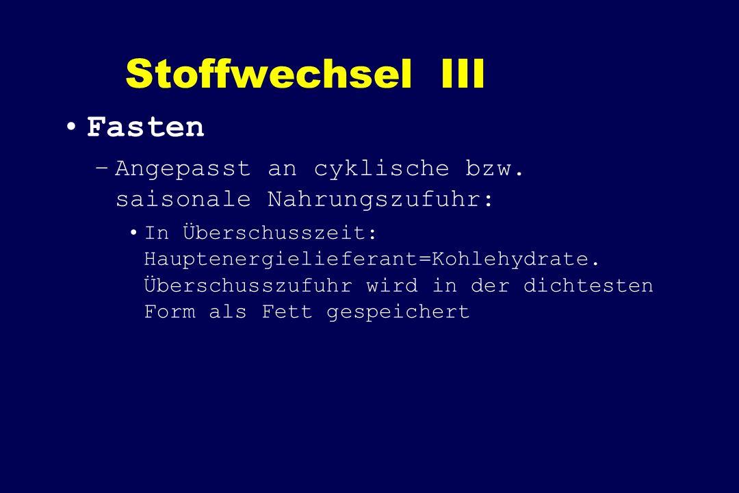 Stoffwechsel III Fasten –Angepasst an cyklische bzw. saisonale Nahrungszufuhr: In Überschusszeit: Hauptenergielieferant=Kohlehydrate. Überschusszufuhr