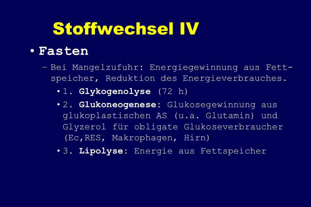 Stoffwechsel IV Fasten –Bei Mangelzufuhr: Energiegewinnung aus Fett- speicher, Reduktion des Energieverbrauches. 1. Glykogenolyse (72 h) 2. Glukoneoge
