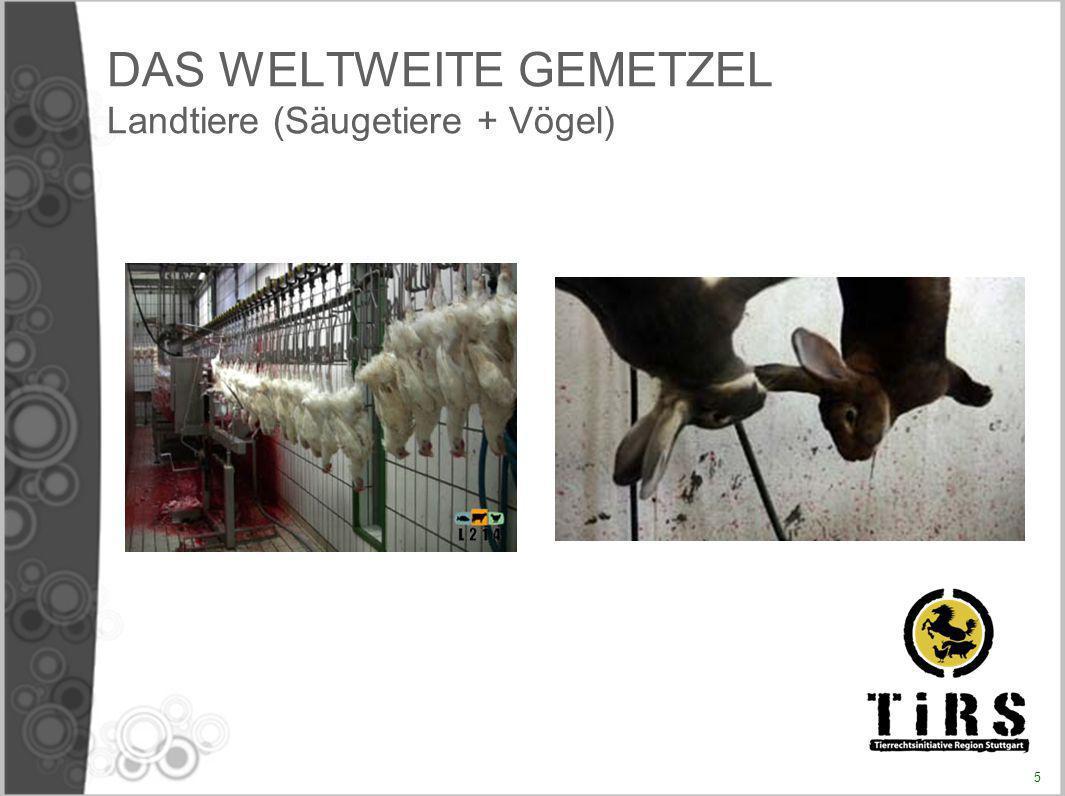 Entstehung des Projektes «Abschaffung von Fleisch» 10 August 2005 : Ein Vortrag mit Diskussion im Rahmen der Estivales de la question animale Antoine Comiti stellt das Thema «Menschensklaverei und Tiersklaverei» vor Diese Konferenz und die Diskussion die folgte stellten den Ursprung des Projektes dar.