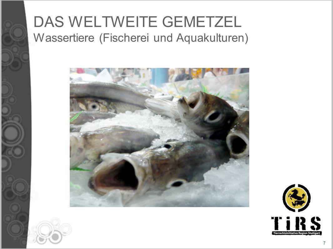 DAS WELTWEITE GEMETZEL Wassertiere (Fischerei und Aquakulturen) 7